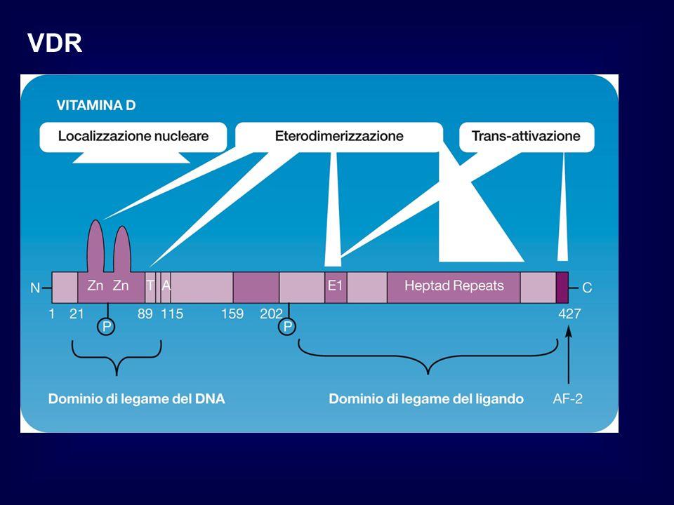 VITAL Riduzione del GFR e della PA Da sottolineare che l'effetto sull'abbassamento della pressione arteriosa e sul lieve decremento del filtrato glomerulare, si è rivelato reversibile alla sospensione del farmaco.