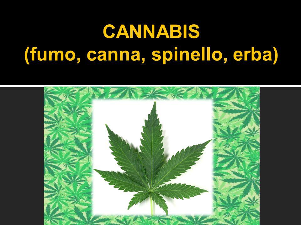 CANNABIS (fumo, canna, spinello, erba)