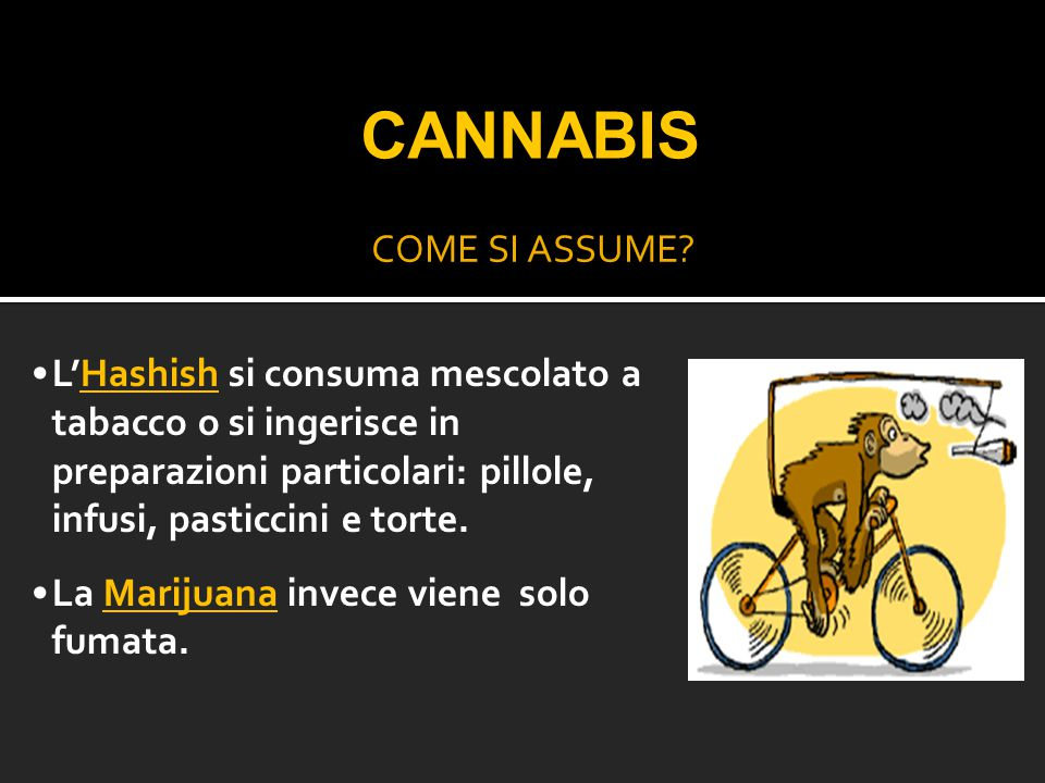 COME SI ASSUME? L'Hashish si consuma mescolato a tabacco o si ingerisce in preparazioni particolari: pillole, infusi, pasticcini e torte. La Marijuana