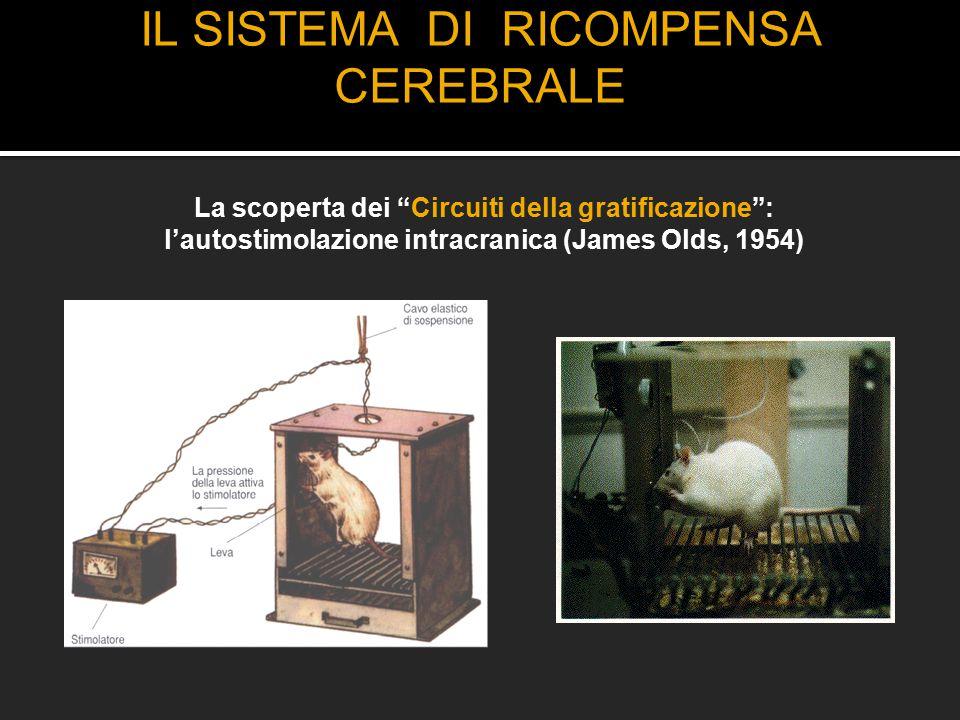 """IL SISTEMA DI RICOMPENSA CEREBRALE La scoperta dei """"Circuiti della gratificazione"""": l'autostimolazione intracranica (James Olds, 1954)"""