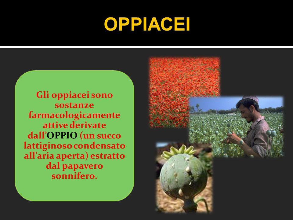 Gli oppiacei sono sostanze farmacologicamente attive derivate dall'OPPIO (un succo lattiginoso condensato all'aria aperta) estratto dal papavero sonni