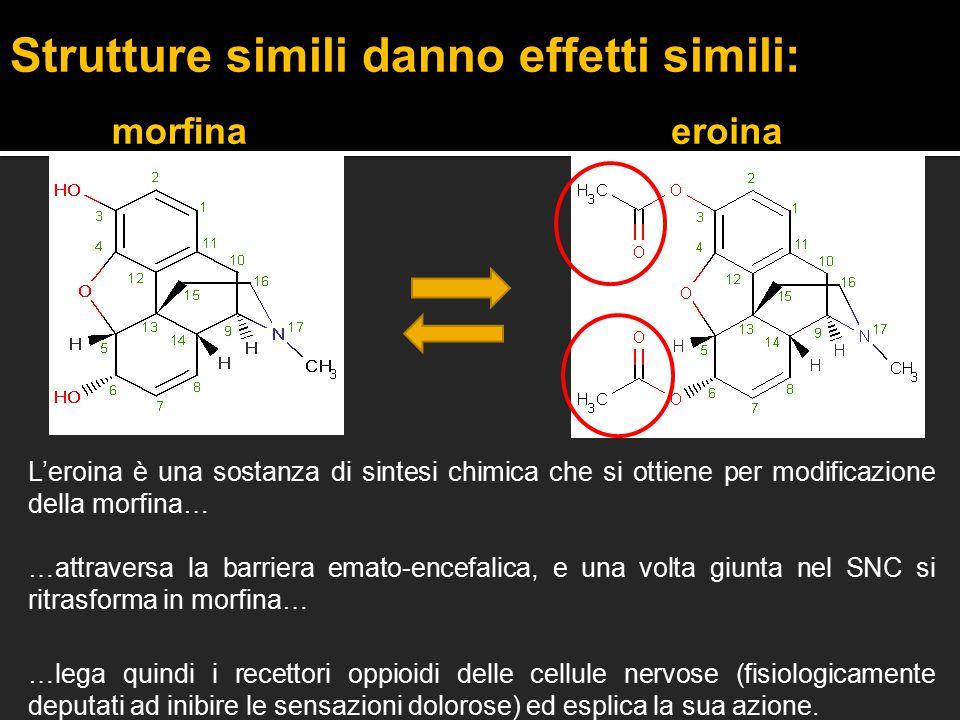 eroinamorfina L'eroina è una sostanza di sintesi chimica che si ottiene per modificazione della morfina… …attraversa la barriera emato-encefalica, e u