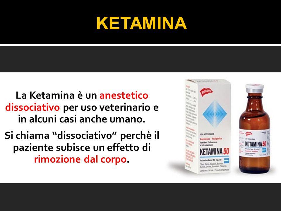 """La Ketamina è un anestetico dissociativo per uso veterinario e in alcuni casi anche umano. Si chiama """"dissociativo"""" perchè il paziente subisce un effe"""