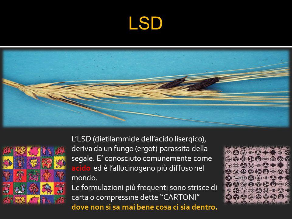 LSD L'LSD (dietilammide dell'acido lisergico), deriva da un fungo (ergot) parassita della segale. E' conosciuto comunemente come acido ed è l'allucino