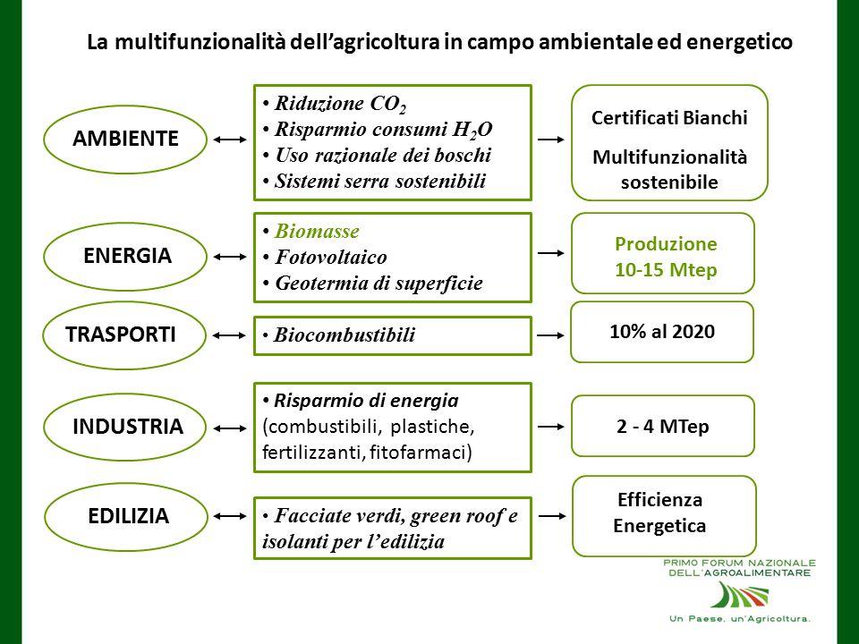 Riduzione CO 2 Risparmio consumi H 2 O Uso razionale dei boschi Sistemi serra sostenibili AMBIENTE Certificati Bianchi Multifunzionalità sostenibile Biomasse Fotovoltaico Geotermia di superficie ENERGIA Produzione 10-15 Mtep Biocombustibili TRASPORTI 10% al 2020 Risparmio di energia (combustibili, plastiche, fertilizzanti, fitofarmaci) INDUSTRIA 2 - 4 MTep Facciate verdi, green roof e isolanti per l'edilizia EDILIZIA Efficienza Energetica La multifunzionalità dell'agricoltura in campo ambientale ed energetico
