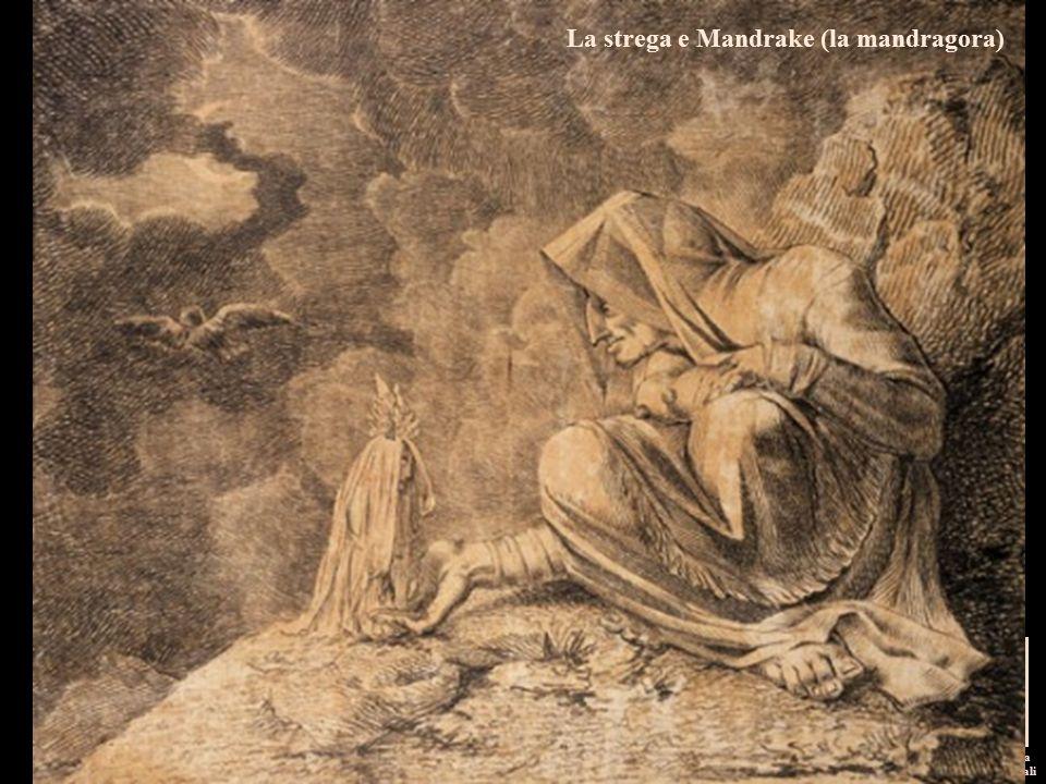 I pittori dell'immaginario Michela Zucca Servizi Culturali La strega e Mandrake (la mandragora)