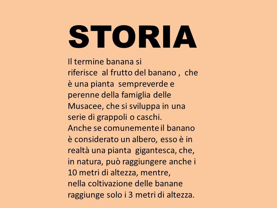 STORIA Il termine banana si riferisce al frutto del banano, che è una pianta sempreverde e perenne della famiglia delle Musacee, che si sviluppa in una serie di grappoli o caschi.