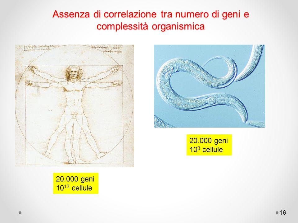 16 Assenza di correlazione tra numero di geni e complessità organismica 20.000 geni 10 13 cellule 20.000 geni 10 3 cellule