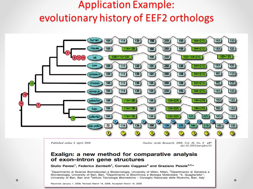 Application Example: evolutionary history of EEF2 orthologs