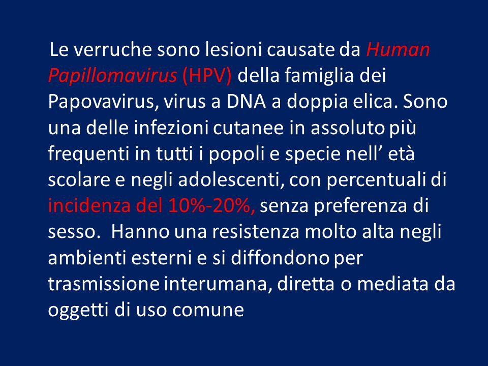 Le verruche sono lesioni causate da Human Papillomavirus (HPV) della famiglia dei Papovavirus, virus a DNA a doppia elica. Sono una delle infezioni cu