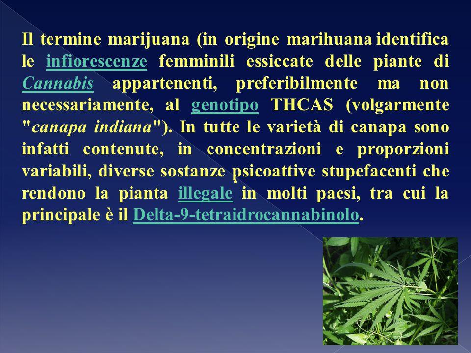 Il termine marijuana (in origine marihuana identifica le infiorescenze femminili essiccate delle piante di Cannabis appartenenti, preferibilmente ma n