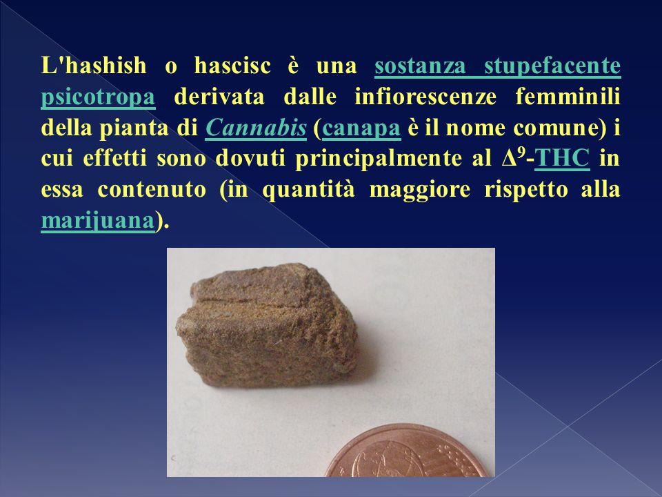L'hashish o hascisc è una sostanza stupefacente psicotropa derivata dalle infiorescenze femminili della pianta di Cannabis (canapa è il nome comune) i