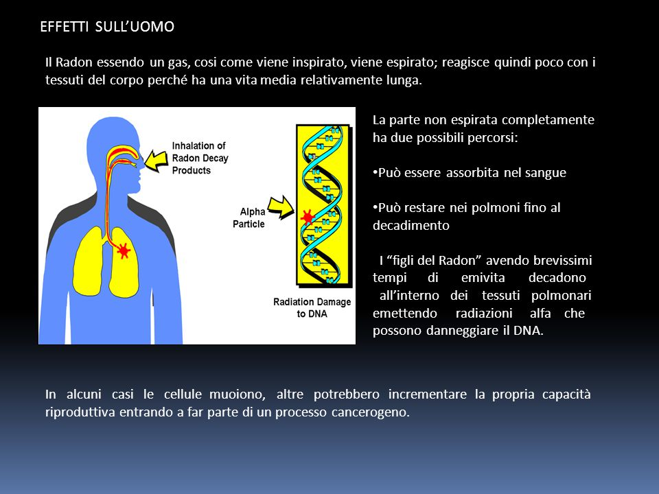 EFFETTI SULL'UOMO Il Radon essendo un gas, cosi come viene inspirato, viene espirato; reagisce quindi poco con i tessuti del corpo perché ha una vita
