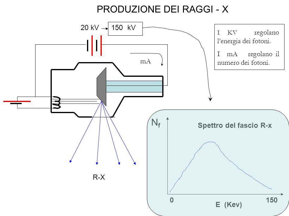 PRODUZIONE DEI RAGGI - X 20 kV 150 kV NfNf E (Kev) 1500 R-X Spettro del fascio R-x I KV regolano l'energia dei fotoni.