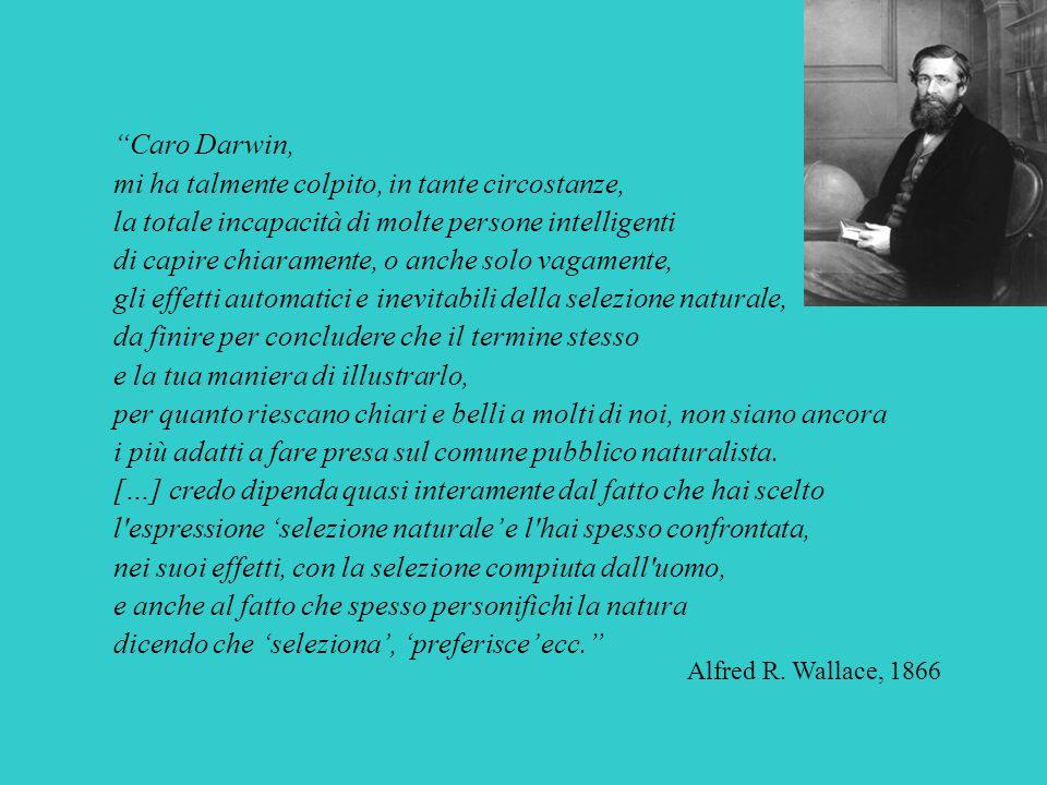"""""""Caro Darwin, mi ha talmente colpito, in tante circostanze, la totale incapacità di molte persone intelligenti di capire chiaramente, o anche solo vag"""
