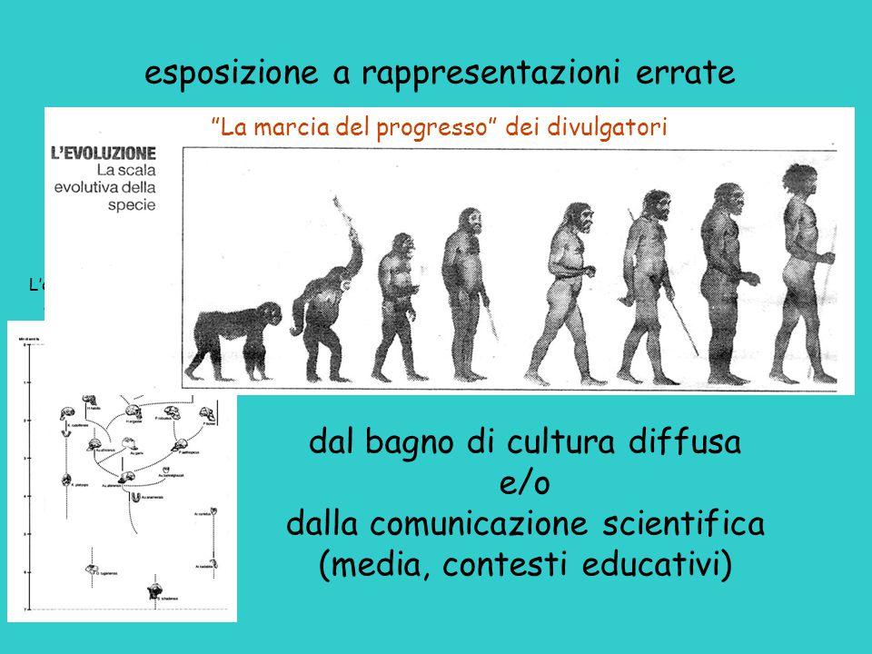 dal bagno di cultura diffusa e/o dalla comunicazione scientifica (media, contesti educativi) L'evoluzione degli ominidi secondo gli scienziati esposiz