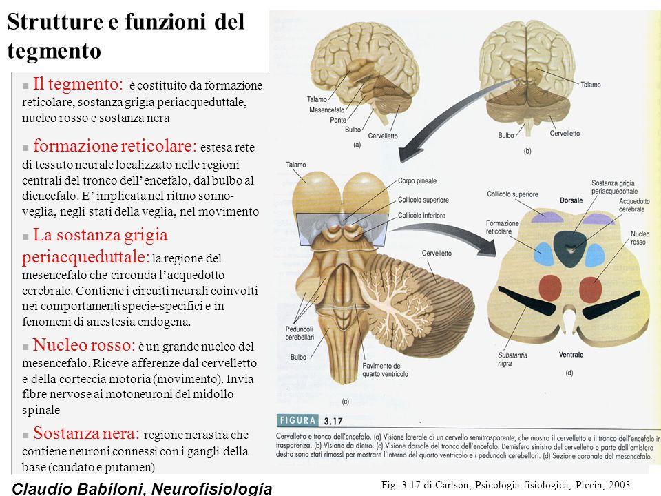 Claudio Babiloni, Neurofisiologia Strutture e funzioni del tegmento n Il tegmento: è costituito da formazione reticolare, sostanza grigia periacquedut