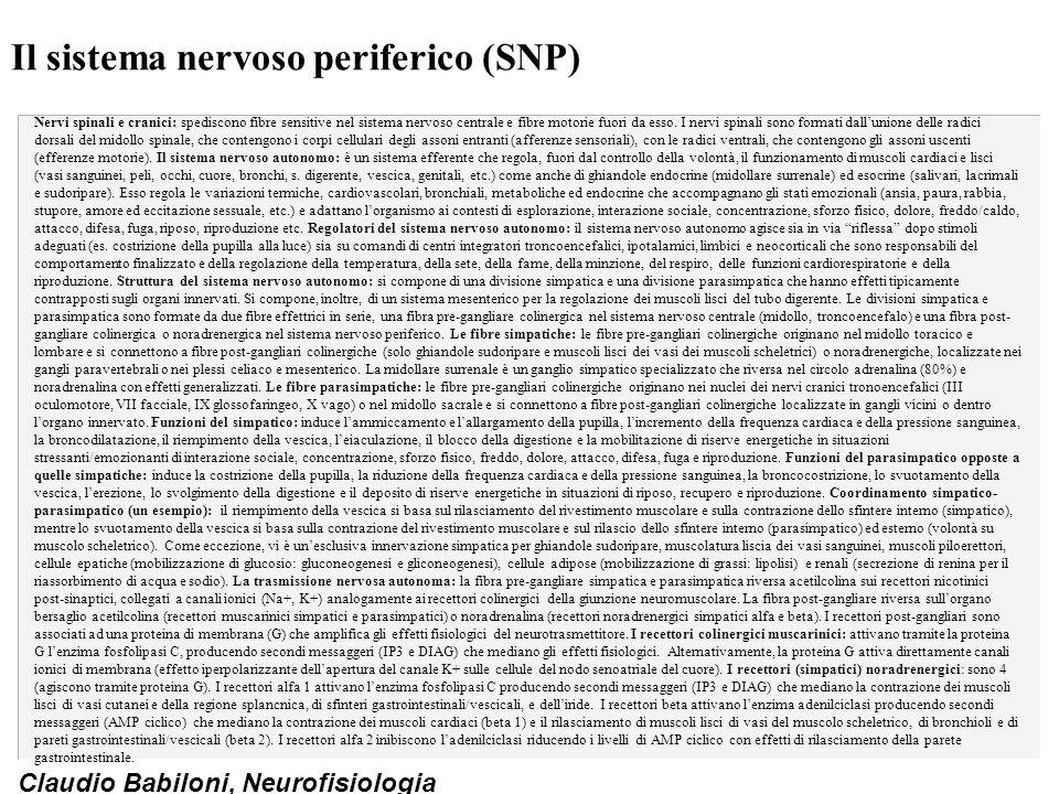 Claudio Babiloni, Neurofisiologia Il sistema nervoso periferico (SNP) Nervi spinali e cranici: spediscono fibre sensitive nel sistema nervoso centrale