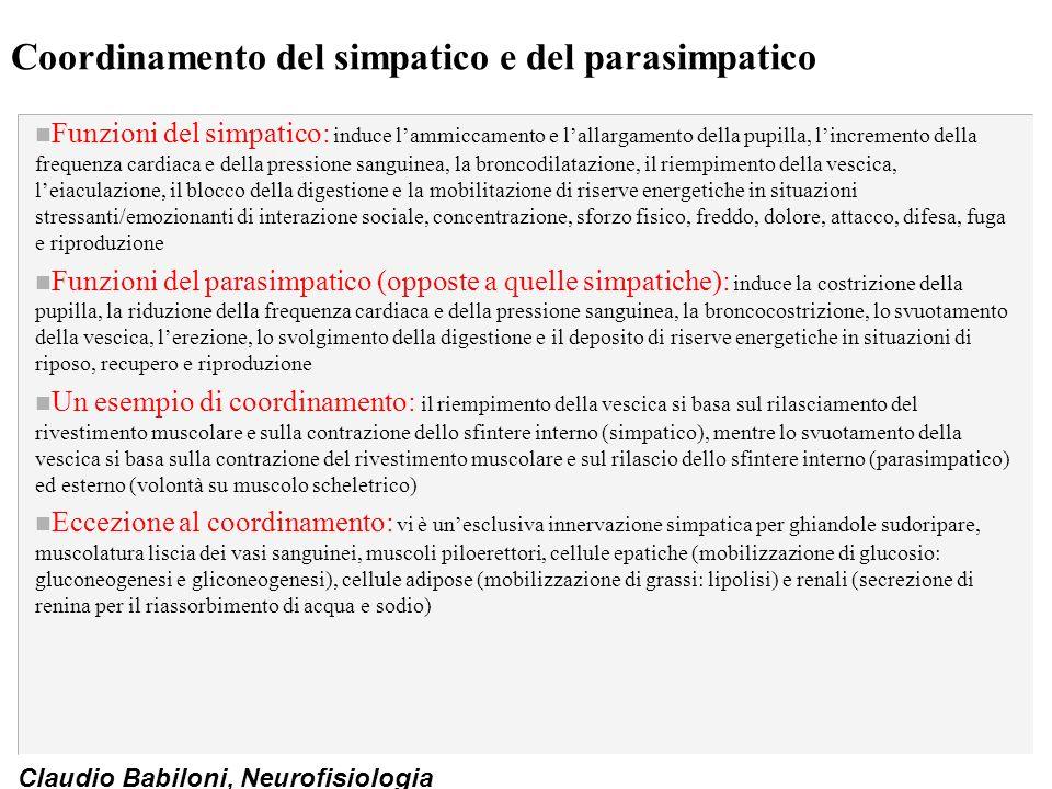 Claudio Babiloni, Neurofisiologia Coordinamento del simpatico e del parasimpatico n Funzioni del simpatico: induce l'ammiccamento e l'allargamento del