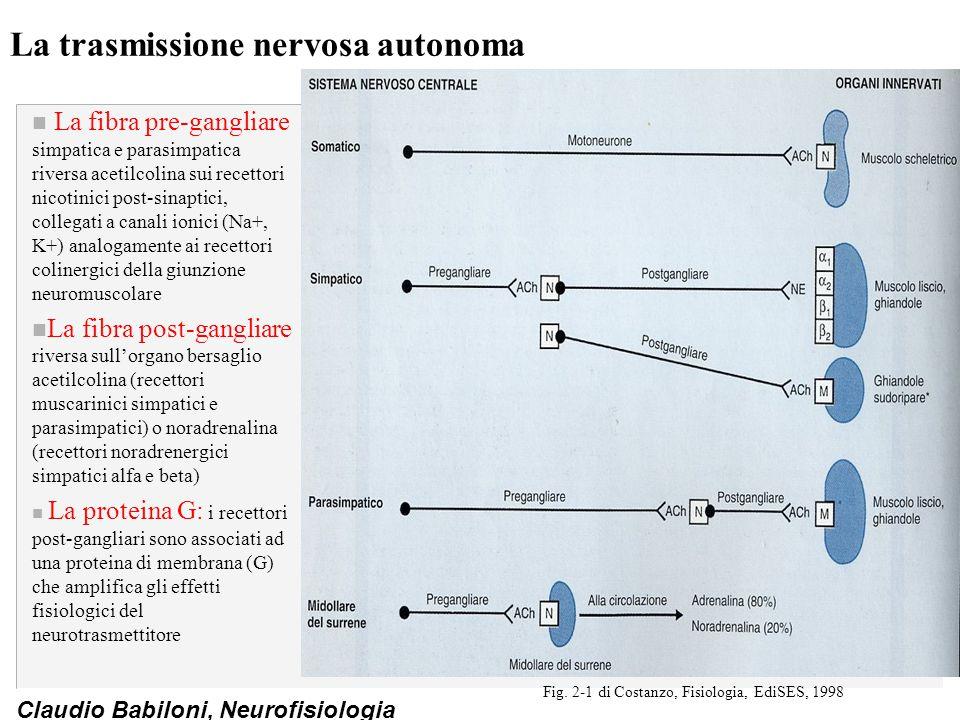 Claudio Babiloni, Neurofisiologia La trasmissione nervosa autonoma n La fibra pre-gangliare simpatica e parasimpatica riversa acetilcolina sui recetto