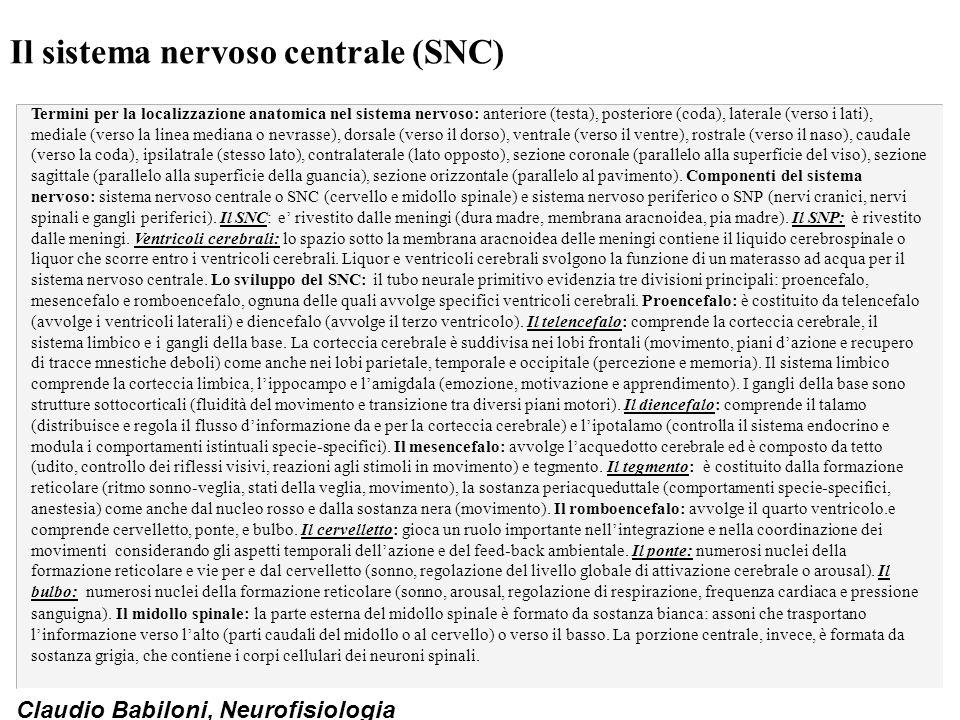 Claudio Babiloni, Neurofisiologia Il sistema nervoso centrale (SNC) Termini per la localizzazione anatomica nel sistema nervoso: anteriore (testa), po