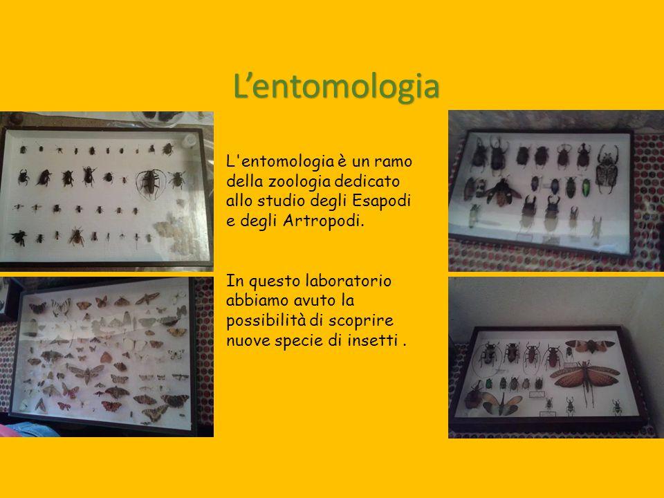 L'entomologia L'entomologia è un ramo della zoologia dedicato allo studio degli Esapodi e degli Artropodi. In questo laboratorio abbiamo avuto la poss