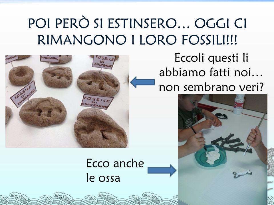 POI PERÒ SI ESTINSERO… OGGI CI RIMANGONO I LORO FOSSILI!!.