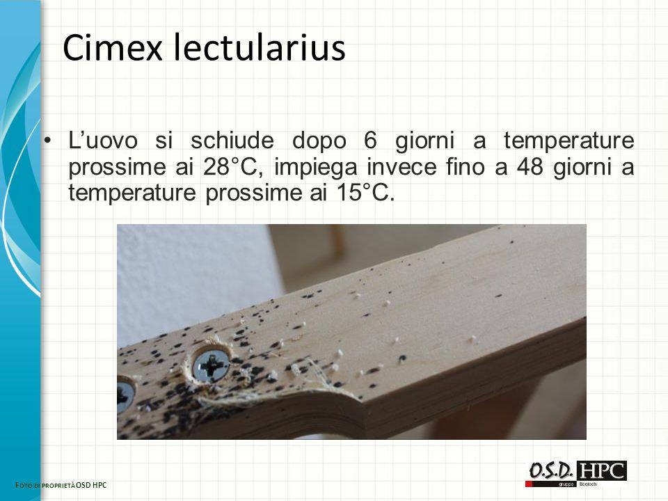 Cimex lectularius L'uovo si schiude dopo 6 giorni a temperature prossime ai 28°C, impiega invece fino a 48 giorni a temperature prossime ai 15°C. F OT