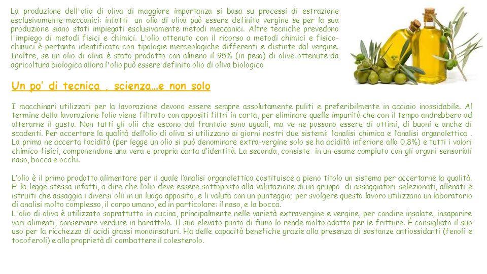 L'Oliva e l'Olio Extra-Vergine L oliva è il frutto commestibile dell olivo, usato a scopo alimentare sia direttamente, dopo adeguata trasformazione, sia come materia prima per l estrazione dell olio.