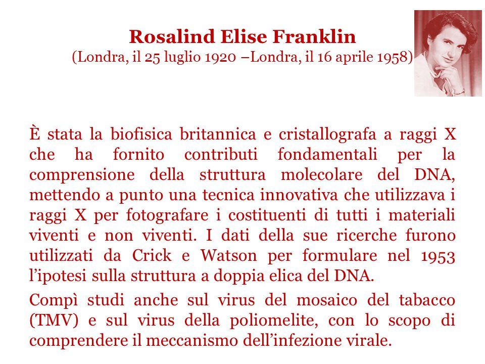 Rosalind Elise Franklin (Londra, il 25 luglio 1920 –Londra, il 16 aprile 1958) È stata la biofisica britannica e cristallografa a raggi X che ha fornito contributi fondamentali per la comprensione della struttura molecolare del DNA, mettendo a punto una tecnica innovativa che utilizzava i raggi X per fotografare i costituenti di tutti i materiali viventi e non viventi.