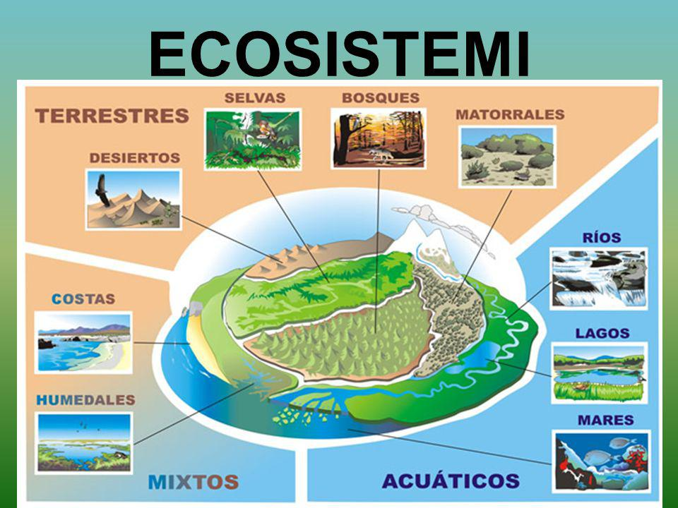 L'ecosistema Oggi si parla di ambiente naturale e soprattutto dei problemi che lo riguardano.