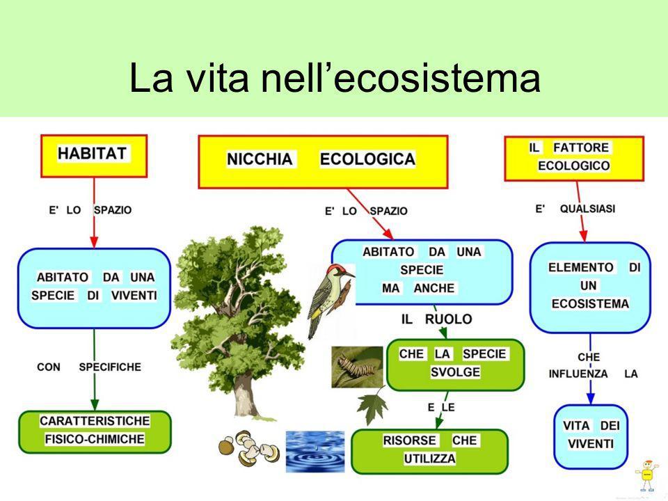All'interno di un ecosistema si formano diverse relazioni tra gli esseri viventi.