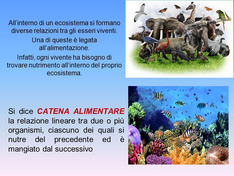 All'interno di un ecosistema si formano diverse relazioni tra gli esseri viventi. Una di queste è legata all'alimentazione. Infatti, ogni vivente ha b