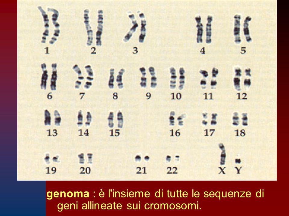 genoma : è l'insieme di tutte le sequenze di geni allineate sui cromosomi.