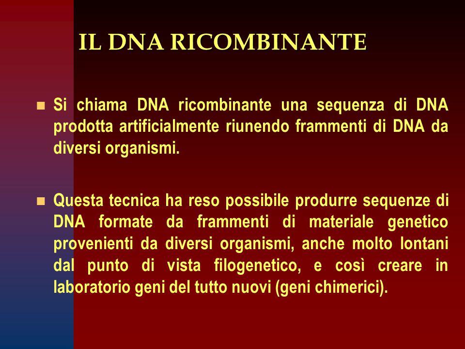IL DNA RICOMBINANTE n n Si chiama DNA ricombinante una sequenza di DNA prodotta artificialmente riunendo frammenti di DNA da diversi organismi.