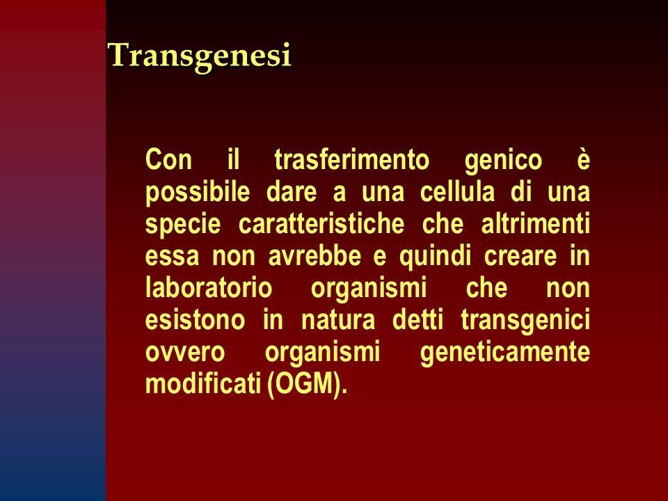 TransgenesiTransgenesi Con il trasferimento genico è possibile dare a una cellula di una specie caratteristiche che altrimenti essa non avrebbe e quindi creare in laboratorio organismi che non esistono in natura detti transgenici ovvero organismi geneticamente modificati (OGM).
