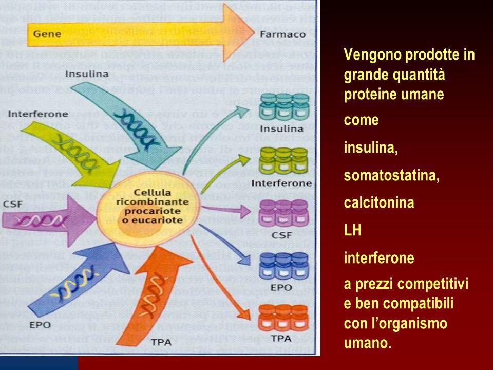 Vengono prodotte in grande quantità proteine umane come insulina, somatostatina, calcitonina LH interferone a prezzi competitivi e ben compatibili con