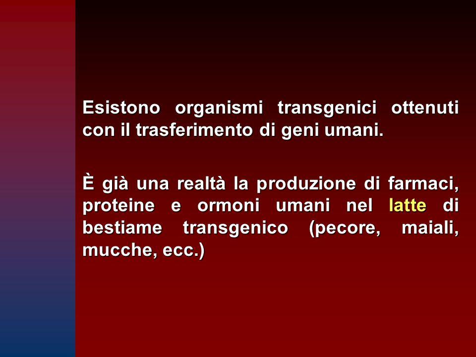 Esistono organismi transgenici ottenuti con il trasferimento di geni umani. È già una realtà la produzione di farmaci, proteine e ormoni umani nel lat