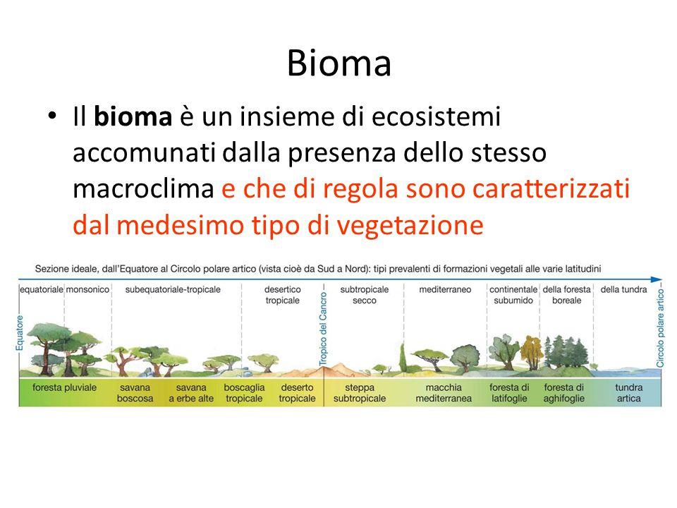 Bioma Il bioma è un insieme di ecosistemi accomunati dalla presenza dello stesso macroclima e che di regola sono caratterizzati dal medesimo tipo di v
