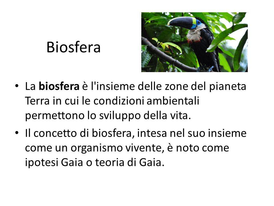 Biosfera La biosfera è l'insieme delle zone del pianeta Terra in cui le condizioni ambientali permettono lo sviluppo della vita. Il concetto di biosfe