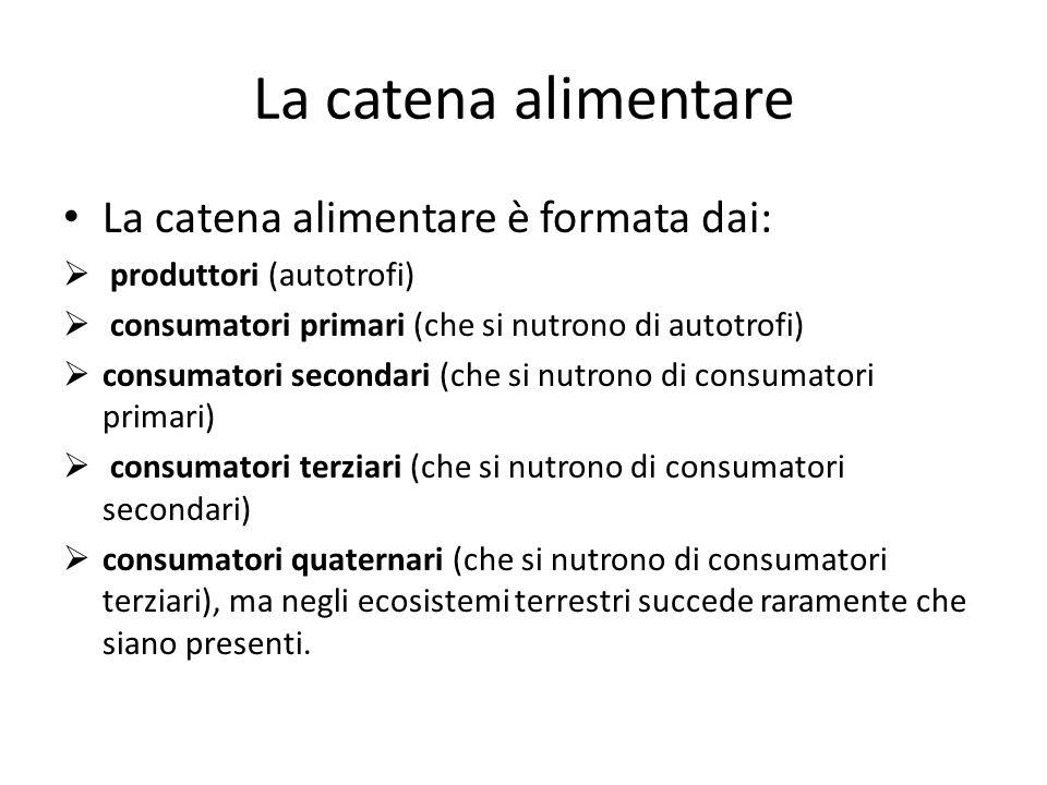 La catena alimentare La catena alimentare è formata dai:  produttori (autotrofi)  consumatori primari (che si nutrono di autotrofi)  consumatori se