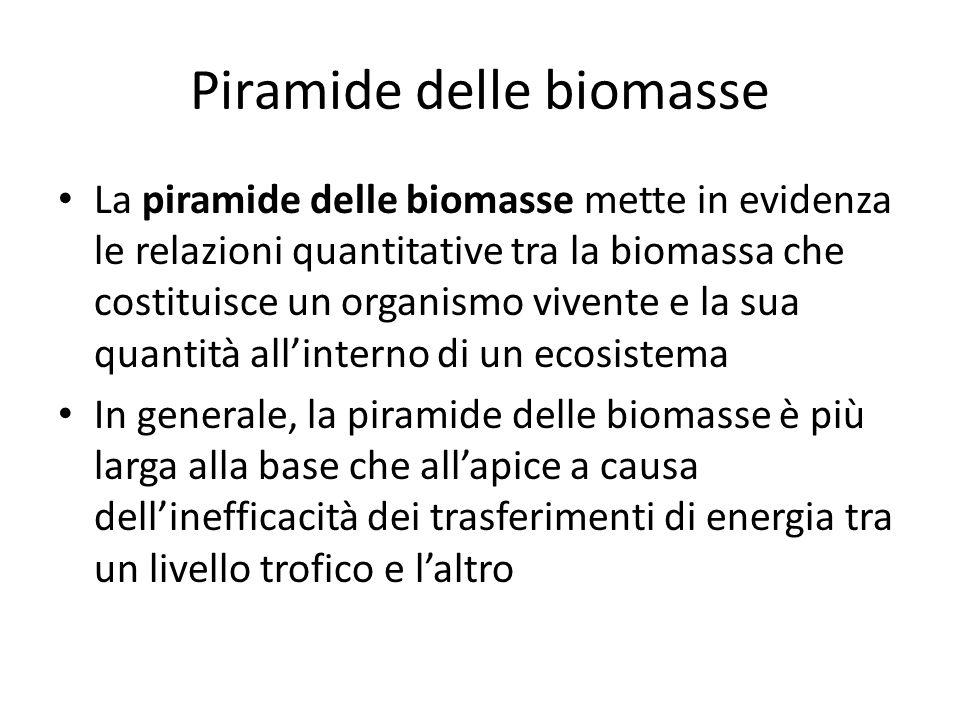 Piramide delle biomasse La piramide delle biomasse mette in evidenza le relazioni quantitative tra la biomassa che costituisce un organismo vivente e