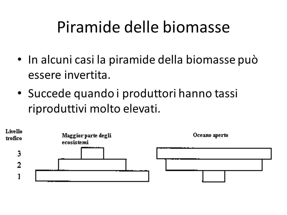 In alcuni casi la piramide della biomasse può essere invertita. Succede quando i produttori hanno tassi riproduttivi molto elevati.