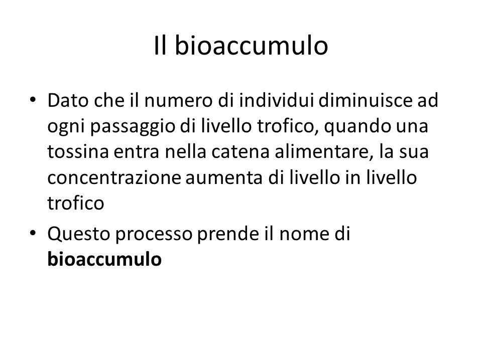 Il bioaccumulo Dato che il numero di individui diminuisce ad ogni passaggio di livello trofico, quando una tossina entra nella catena alimentare, la s