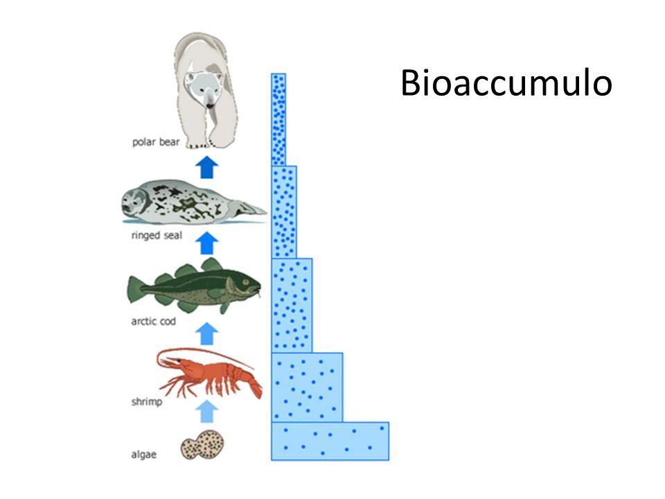 Bioaccumulo