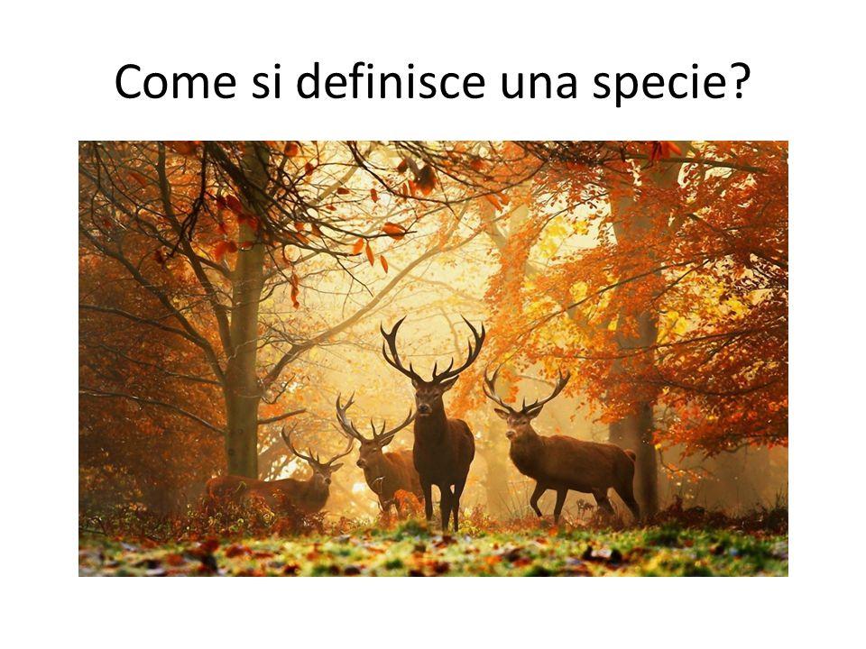 Come si definisce una specie?