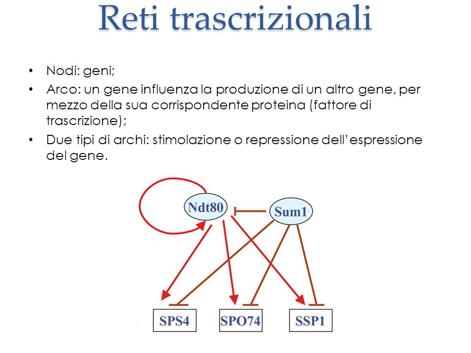 Reti trascrizionali Nodi: geni; Arco: un gene influenza la produzione di un altro gene, per mezzo della sua corrispondente proteina (fattore di trascrizione); Due tipi di archi: stimolazione o repressione dell'espressione del gene.