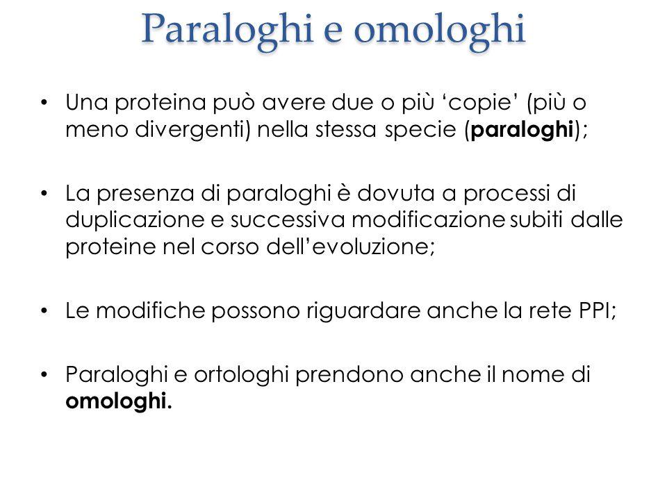Paraloghi e omologhi Una proteina può avere due o più 'copie' (più o meno divergenti) nella stessa specie ( paraloghi ); La presenza di paraloghi è dovuta a processi di duplicazione e successiva modificazione subiti dalle proteine nel corso dell'evoluzione; Le modifiche possono riguardare anche la rete PPI; Paraloghi e ortologhi prendono anche il nome di omologhi.