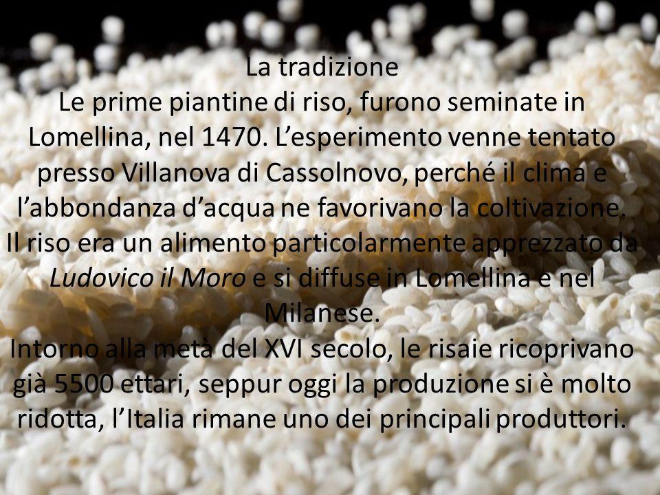 La tradizione Le prime piantine di riso, furono seminate in Lomellina, nel 1470. L'esperimento venne tentato presso Villanova di Cassolnovo, perché il
