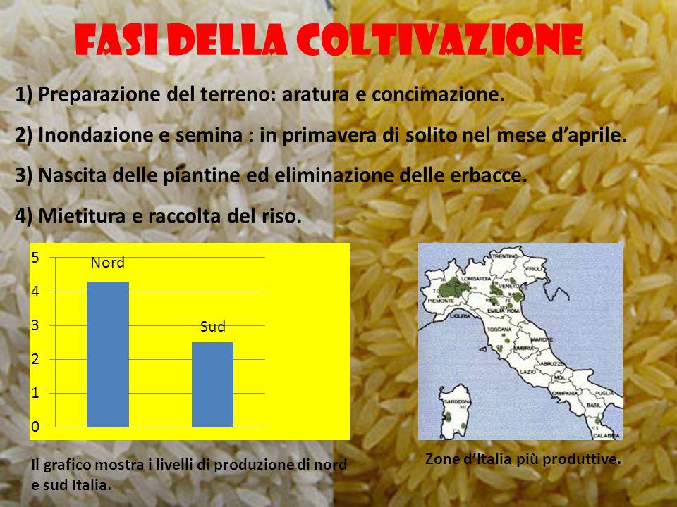 Fasi della Coltivazione 1) Preparazione del terreno: aratura e concimazione. 2) Inondazione e semina : in primavera di solito nel mese d'aprile. 3) Na